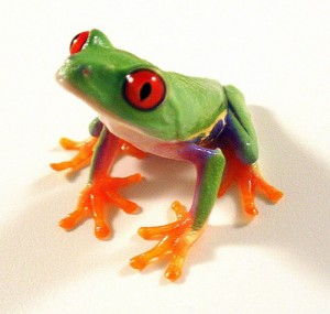 red eyed tree frog facts