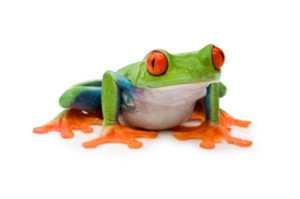 The best red eyed tree frog care