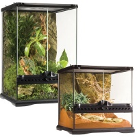red eyed tree frog tanks