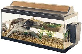 Red Eared Slider Care - finding the right tank