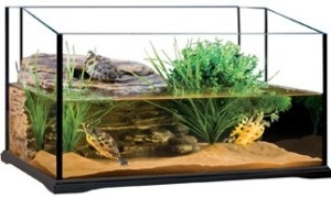 red ear slider turtle tank